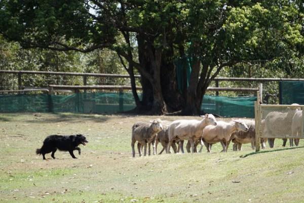 Lone Pine sanctuary dog show