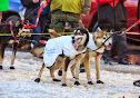 Iditarod2015_0370.JPG