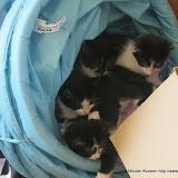 katten - 2011-04-11%2B11-36-29%2B-%2BIMG_0389.JPG