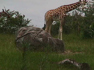 0390African Safari