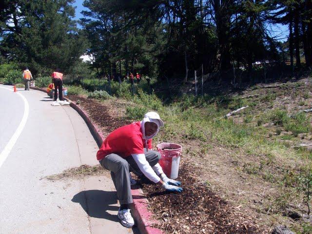 IVLP 2010 - Volunteer Work at Presidio Trust - 100_1426.JPG