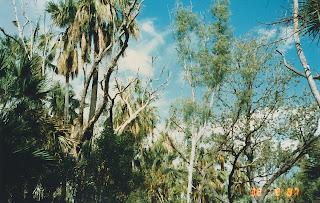 1410Mataranka Springs