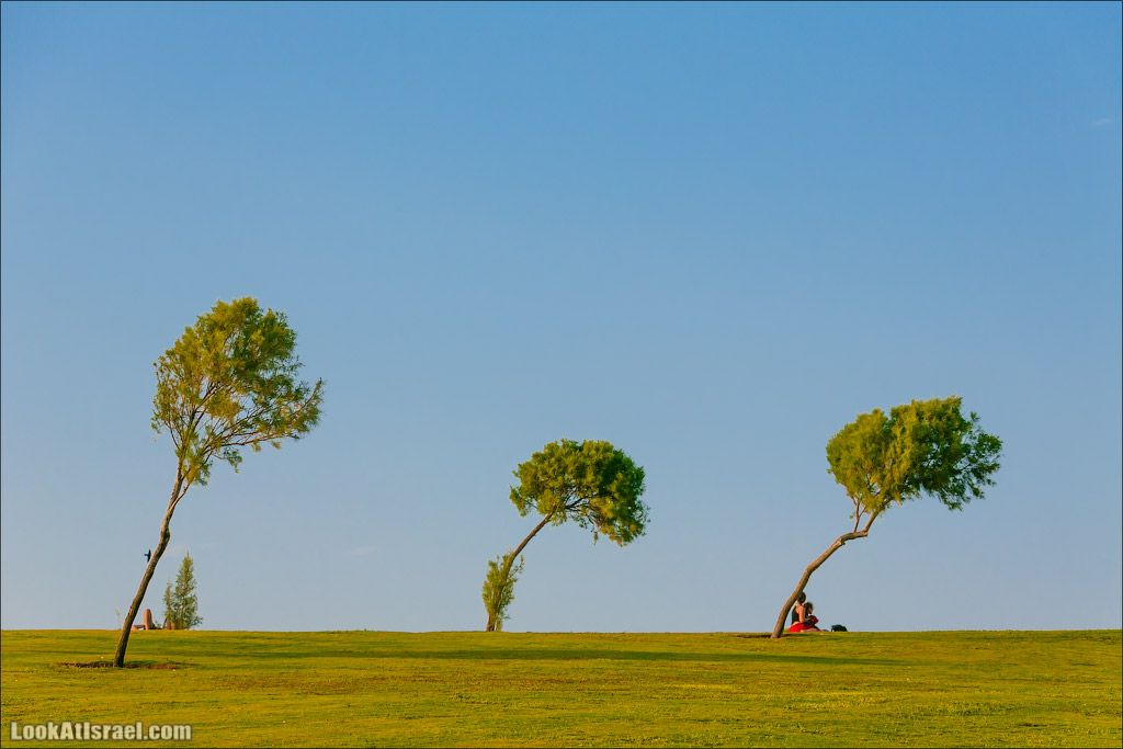 Три trees в одно фото
