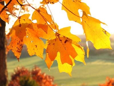 Fall arrives at Rock Eddy Bluff