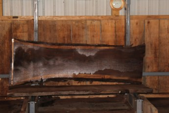 "554  Walnut -7 10/4 x  34"" x  25"" Wide x 8'  Long"