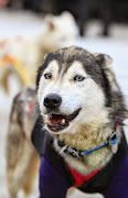 Iditarod2015_0128.JPG