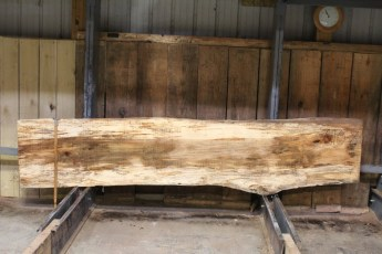 """610 Maple Spalted - 8 10/4x 22"""" x 20"""" Wide x  10'  Long"""