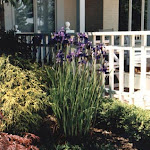 images-Landscape Design and Installation-lnd_dsn_13.jpg