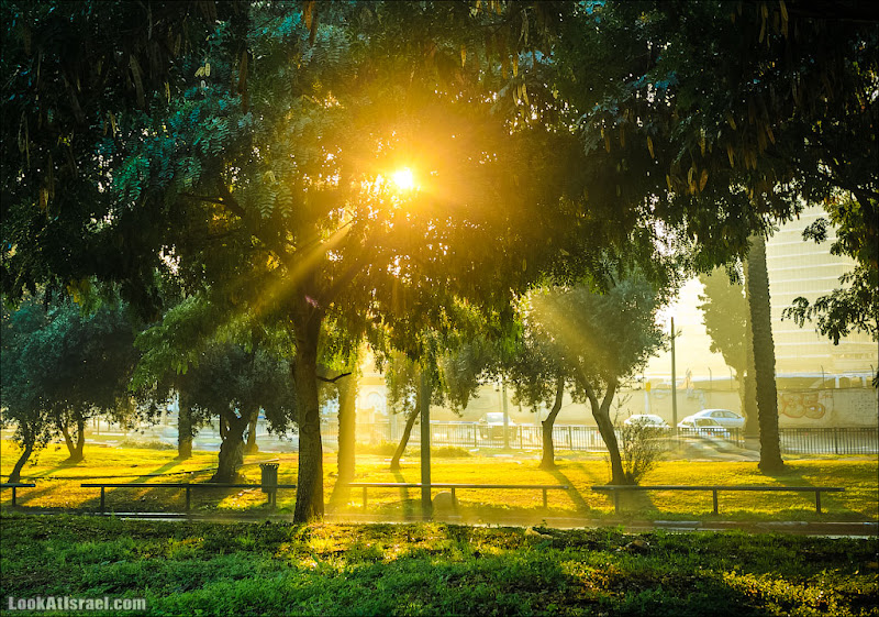 Одно фото / Утро красит