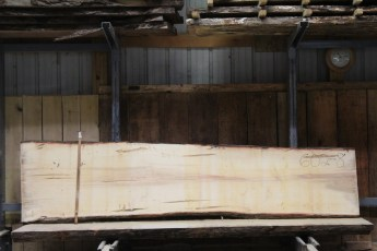 "602  Ambrosia Maple - 8 8/4x 29"" x 25"" Wide x  10'  Long"