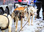 Iditarod2015_0017.JPG