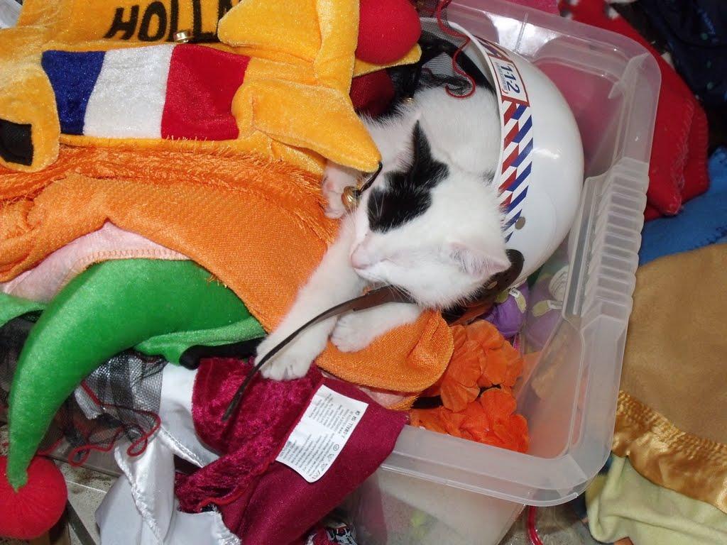 katten - 2010-07-07%2B10-53-47%2B-%2BDSCF1361.JPG
