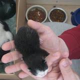 katten - 2011-02-26%2B12-08-23%2B-%2BIMG_0249.JPG