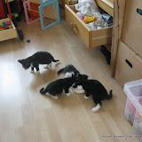 katten - 2011-04-08%2B16-31-43%2B-%2BIMG_0381.JPG