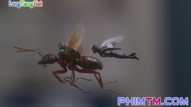 Xem Phim Người Kiến Và Chiến Binh Ong - Ant-man And The Wasp - phimtm.com - Ảnh 3