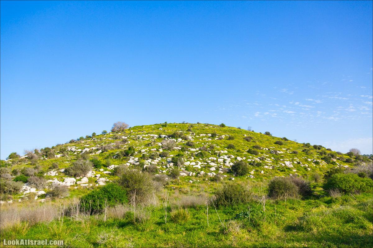 Люпины в Израиле | LookAtIsrael.com - Фото путешествия по Израилю