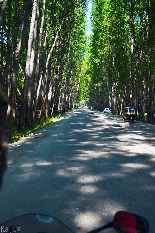 The Green tunnel Srinagar
