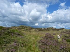 Heading towards Birk Fell