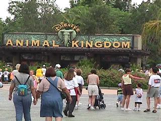 0510Animal Kingdom Parking Lot