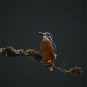 Intermediate 2nd - Early Morning Angler_Elaine Rushton.jpg