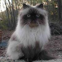 Cats0018crop.jpg