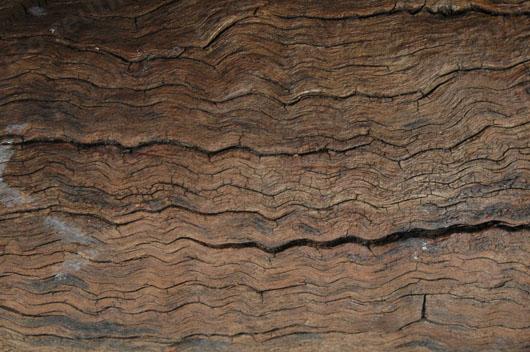 textura de madeira seca download