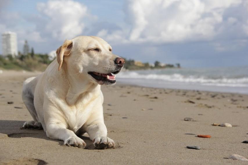 lugares-pet-friendly-españa-mascotas-perros-que-es