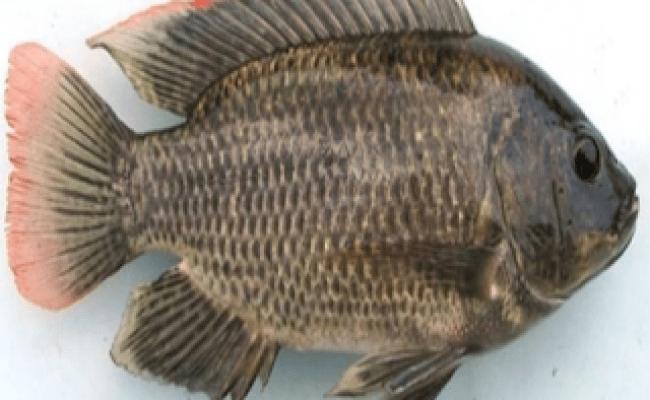 Mimpi di kasih ikan lele togel