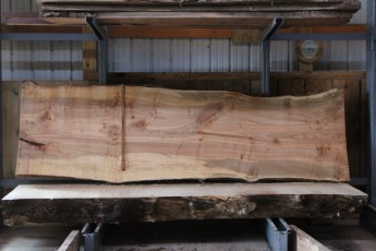 "564  Hard Maple Curly Burly -7 10/4 x  41"" x  34"" Wide x  11'  Long"