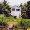 Abbie's House Cow.jpg