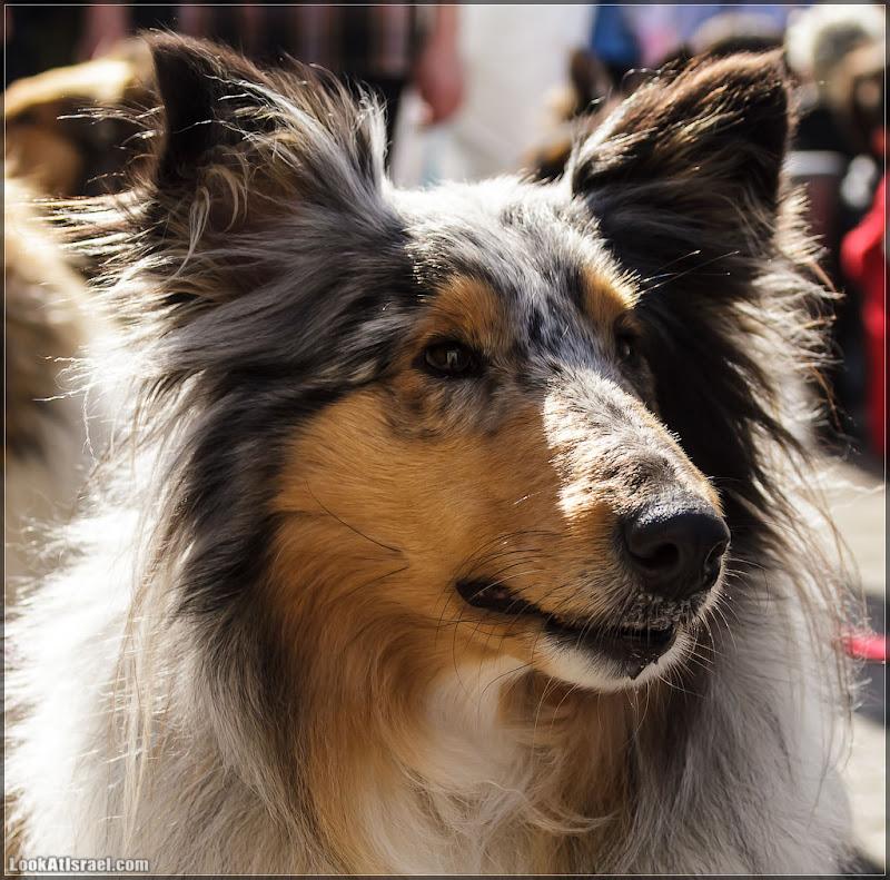 Собаки - человеко-жизни спасаки