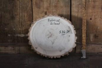 """536 Balm of Gilead -7  2 3/4""""x 14"""" Dia"""