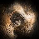 Intermediate 1st - Down the eye of a bastard poachers gun_Peter Xerri.jpg