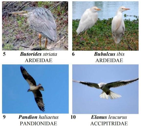 Guía de aves - Itzatá