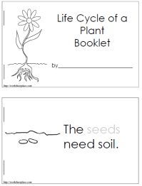 Life Cycle Of A Flowering Plant Worksheet