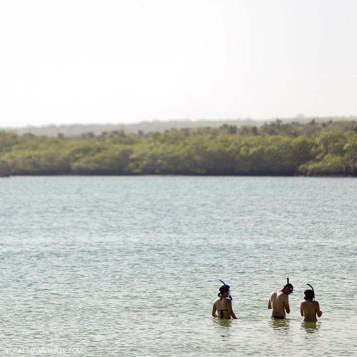 Snorkeling at Tortuga Bay Santa Cruz Galapagos Islands.