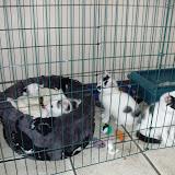 katten - 2010-06-20%2B12-02-38%2B-%2BDSCF1290.JPG