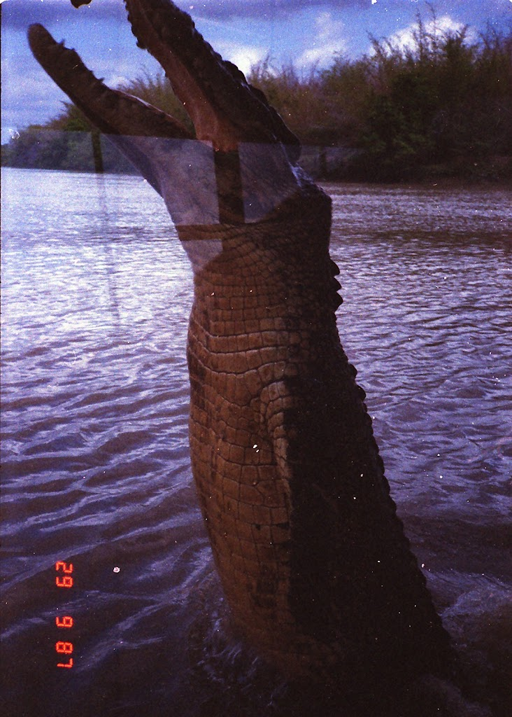 5990Adelaide River Croc Tour