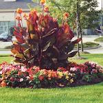 images-Seasonal Color-flowers_3.jpg