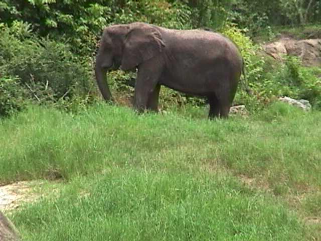 0320African Safari