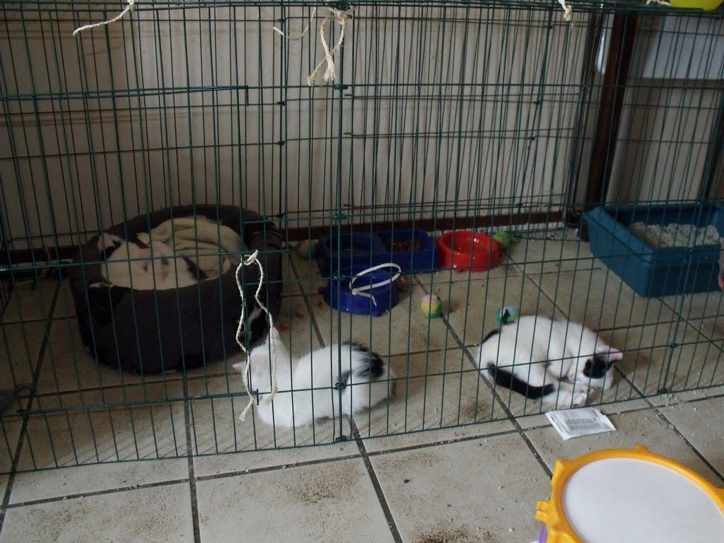 katten - 2010-07-03%2B15-50-04%2B-%2BDSCF1333.JPG