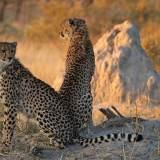south africa safari best season