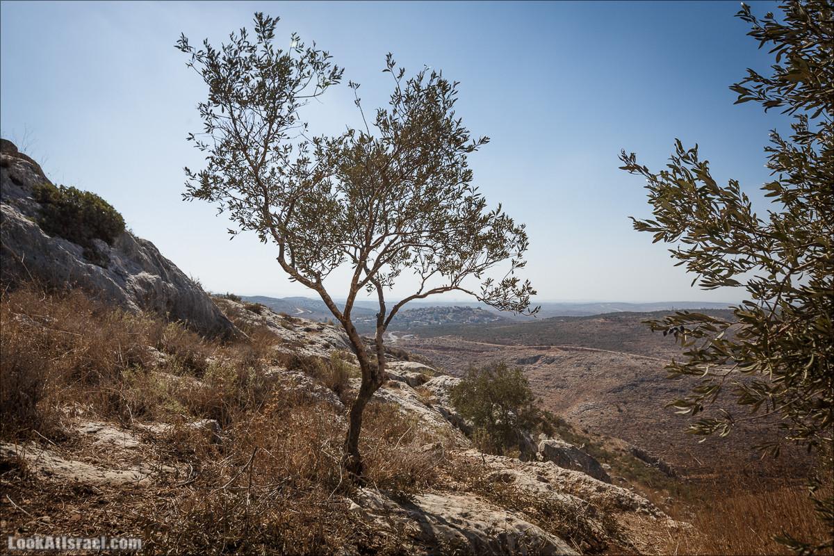 балкон страны и крепость монастырь Дир Кала | Deir Kala Castle | מרפסת של המדינה ומנזר דיר קלעה | LookAtIsrael.com - Фото путешествия по Израилю