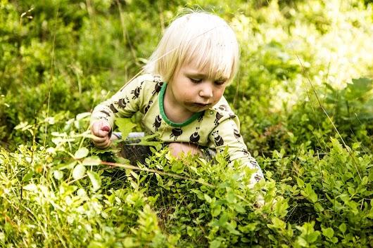 Svenske blåbær - Mikkel Bækgaards Madblog-13.jpg