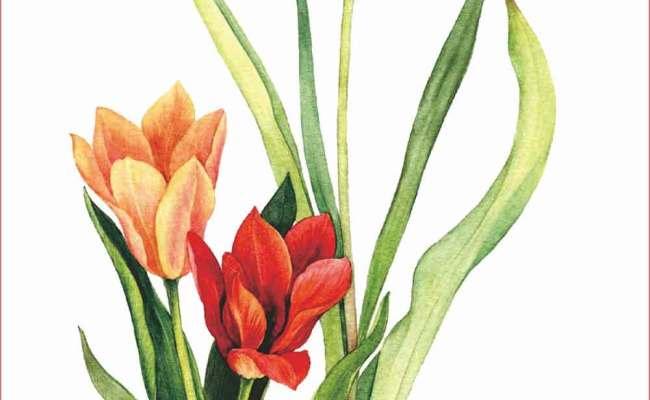 Contoh Lukisan Pasu Bunga Contoh Ssss Cute766