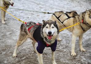 Iditarod2015_0125.JPG
