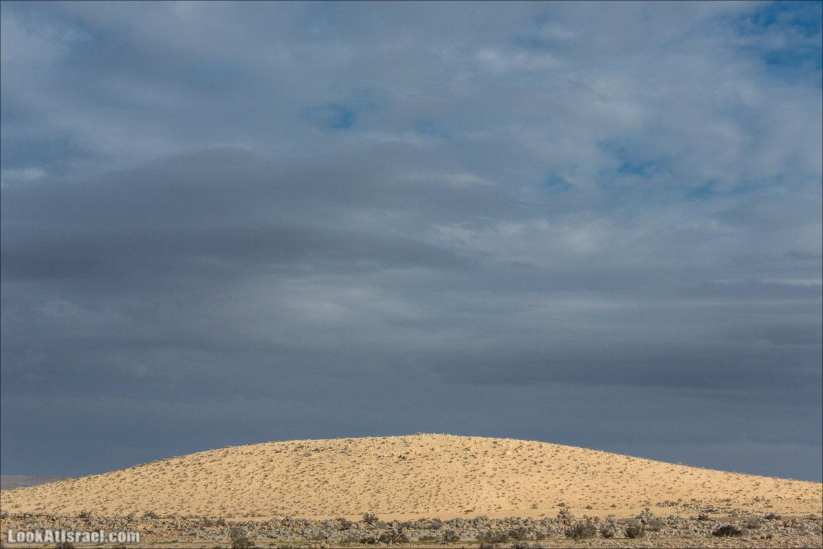 Пустыня Негев в Израиле   Negev desert in Israel   מדבר נגב גשום   LookAtIsrael.com - Фото путешествия по Израилю
