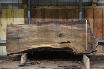"585  Walnut -2 10/4 x 35"" x  29"" Wide x  8'  Long"