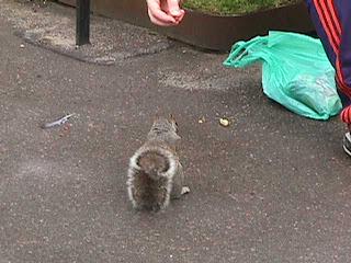 3100Squirrels in Queen
