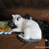 katten - 2011-04-09%2B18-05-15%2B-%2BIMG_0385.JPG